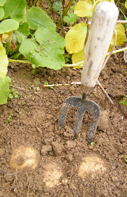 Fork in soil